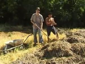 Bi in field